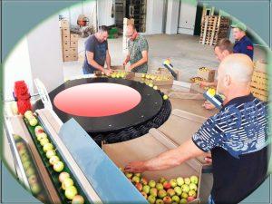 Оборудование для фруктов